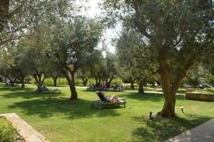 Iberotel Apulia-parco degli ulivi