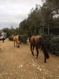 i cavallini del CIT in pensione (1)