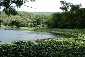 Riserva_naturale_degli_Astroni__Lago_grande_