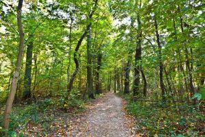 foreste-di-querce