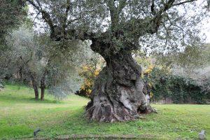 l'oasi di Paolo Portoghesi (2)